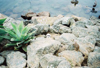 8/19/04 Morro Bay (kitty's got an identity crisis)