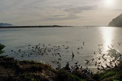1/17/05 Morro Bay