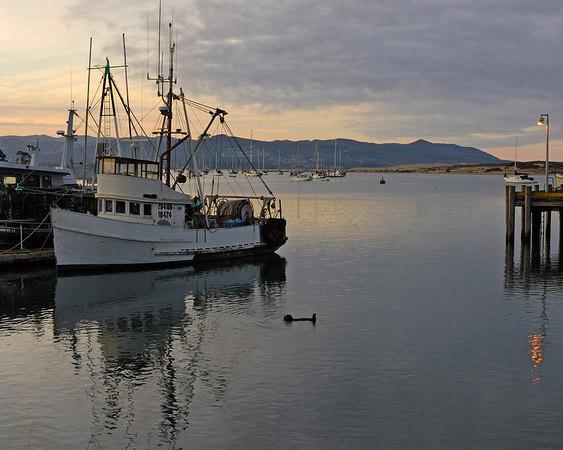 Morning, Harbor, Morro Bay