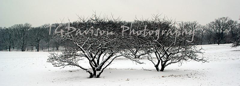 morton arboretum fresh snow