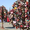 Locks of Love, Moscow<br /> <br /> One of many purpose-built iron trees on a bridge across the Vodootvodny Canal in Moscow completely covered in love padlocks. You would see may newly weds near the bridge for photos.