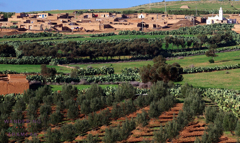 A small town, complete with olive grove