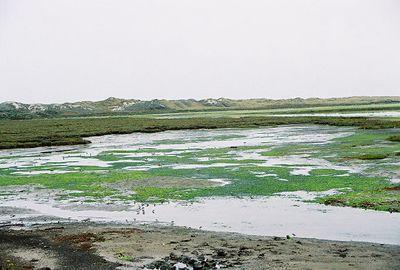 8/18/04 Moss Landing State Beach, Monterey County, CA