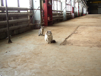 empty hall with cats