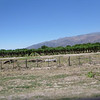 Vineyards heading south on Route 40 from Salta to San Jose de Jachal.