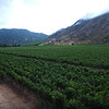 Neyen winery in the Colchagua valley.