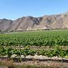 Vineyards on the way to La Serena.