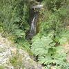 big leafies and waterfalls, between Villa O'Higgins and Pto Yungay