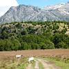 sheep greeted us at the start to our hike,  las Escalas, Reserva Nacional Futaleufú