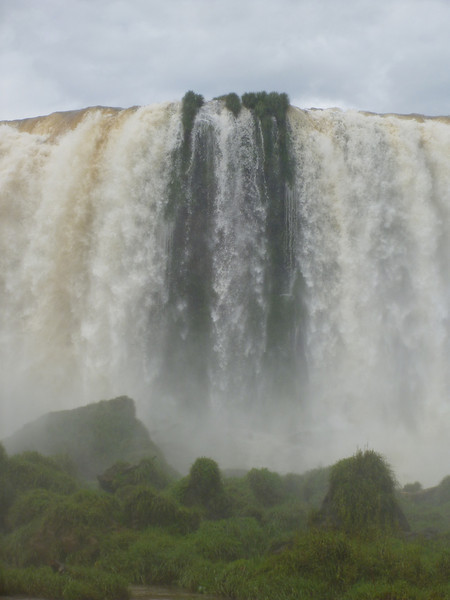 vegetation in the falls  (Foz do Iguassu)