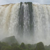 vegetation in the falls  (Foz do Iguassu)