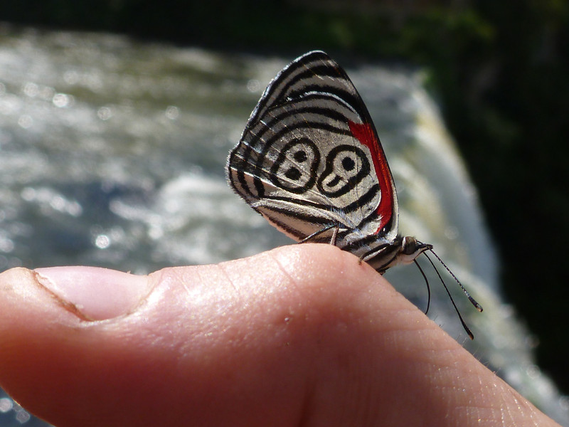 modern looking butterfly and broken thumbnail  (Cataratas de Iguazú)