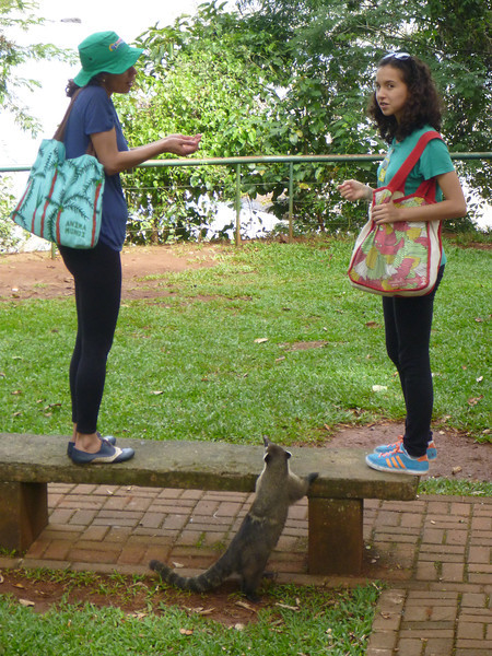 2 ladies trying to avoid a coati attack (Foz do Iguassu)