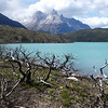 Fire damaged trees, Lago Pehoé, and Cerro Paine Grande, Torres del Paine