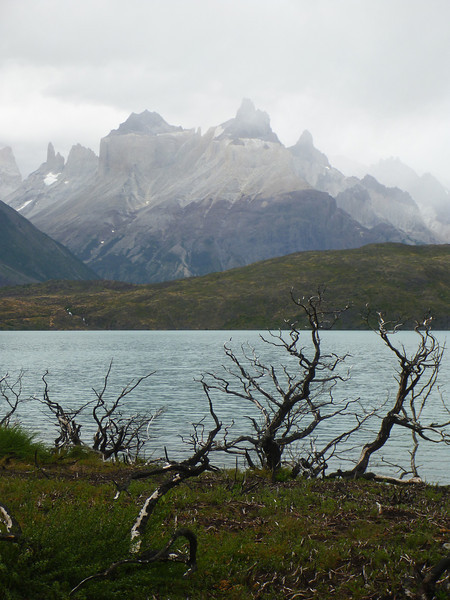 Fire evidence along the banks of Lago Pehoé.  Cerro Paine Grande in background.  Torres del Paine