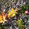Magallanic flora, Torres del Paine