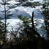 Sneak peek of Glaciar Grey through the trees, Torres del Paine
