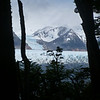 View of Glaciar Grey through the trees, Torres del Paine
