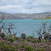 Birds at the waterfront, Lago Pehoé, Torres del Paine