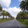 palm trees line the way to Colonia, Uruguay