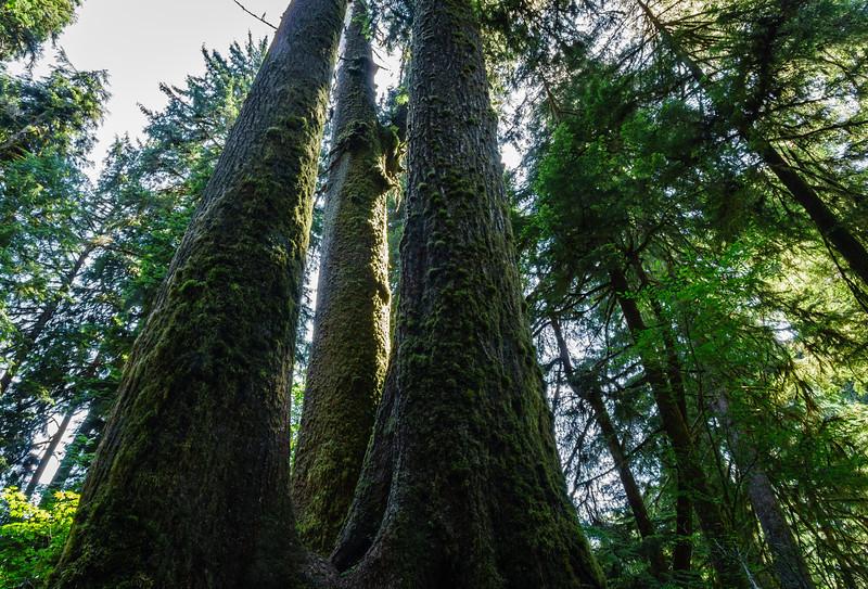 Hoh Rain Forest, WA