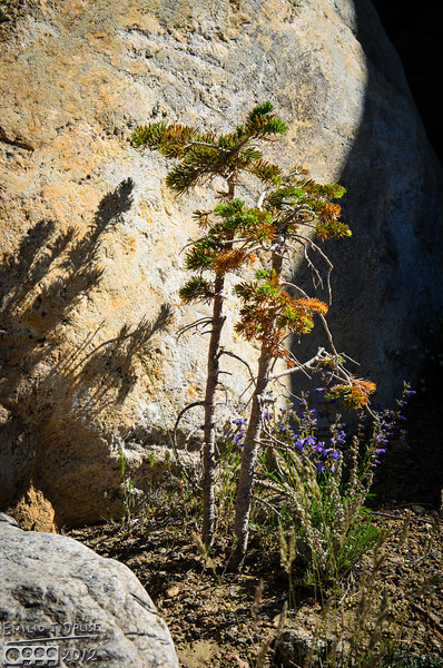 I liked the combination of the baby pines, flowers and large rock standing guard.