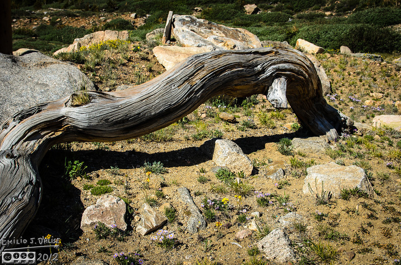 Throughout the area there are contorted trunks framing the landscape.  I can't tell if they were placed there, or if they mark the original location of the once-live tree.