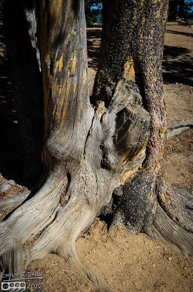 Captured this tree trunk on our walk along the shores of Echo Lake.