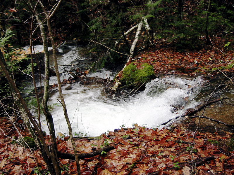 Little stream near the beginning of the trail.  We'd had a storm the day before and many of the trails that we wanted to try would have been washed out.