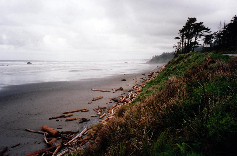 SHORELINE SCENE<br /> Nice shoreline view. Check out all that driftwood. We're looking onto the Straits of Juan de Fuca.
