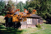 CABIN L125<br /> Longmire<br /> <br /> This would be my home for the winter, one of the cutest places I've ever lived in. I loved the little Japanese maple tree on the corner, especially when it was so colorful.