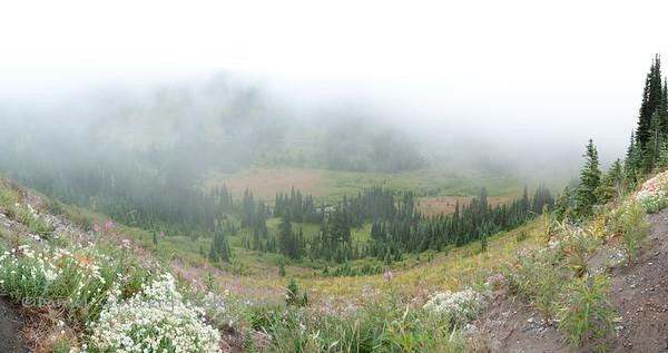 Wild flowers near Paradise, Mount Rainier National Park.