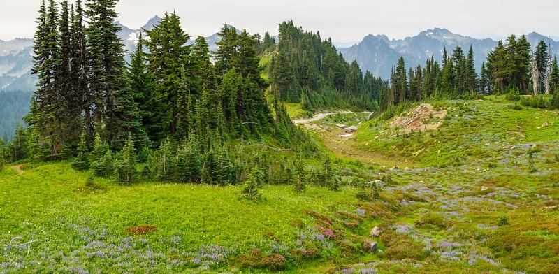 Mt Rainier - Mountain Meadow