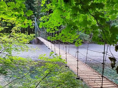 Mt Rainier - Grove of the Patriarchs Nature Trail
