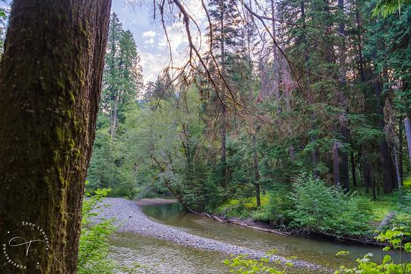 Mt. Rainier - Grove of the Patriarchs Nature Trail