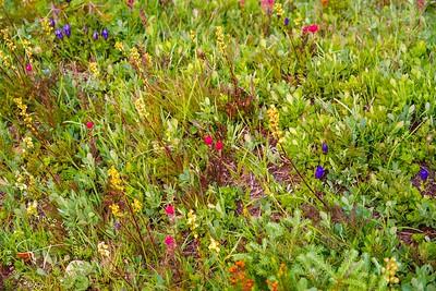 Mt. Rainier Wildflowers