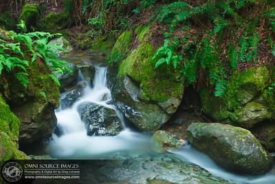 Steep_Ravine_Creek