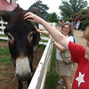 Patient mule, Mount Vernon, August 2, 2008.