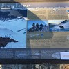 Shasta sign