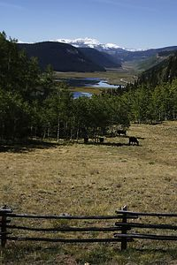 Cows and alpine lake  Co 1494