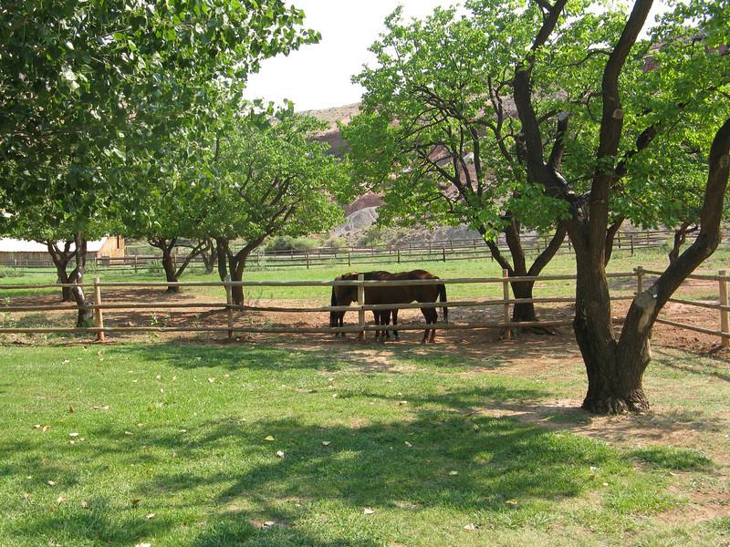 Horses at Fruita campground.