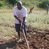 Mozambique - Manica - Chazuka - Ginger farming