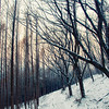 Forest, Mt. Ansan