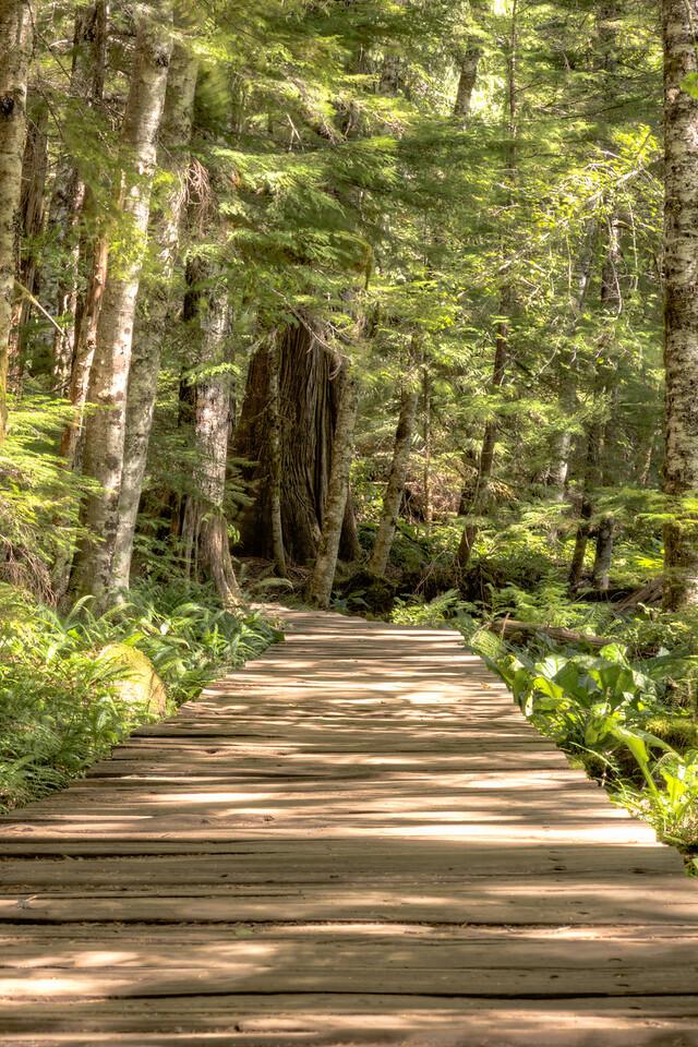 Boardwalk in Rampart Ridge Trail