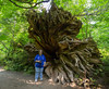 Jan beside a fallen tree in the Grove of the Patriarchs.