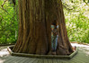 One of the larger trees in the Park is here in the Grove of the Patriarchs.