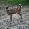 Bambi posing