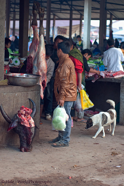 Fresh Water Buffalo For Sale At Market In Muang Sing, Laos