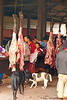 Village Dogs Keeping the Meat Section of the Muang Sing Market Clean, Luang Namtha Province, Laos