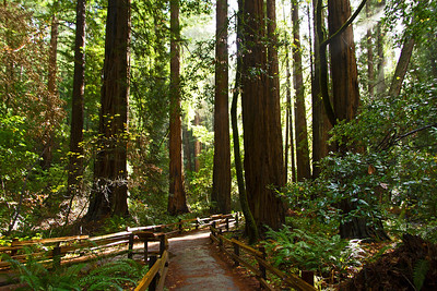 Trails in Muir Woods, California